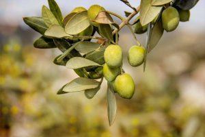 Сертификат соответствия на маслины